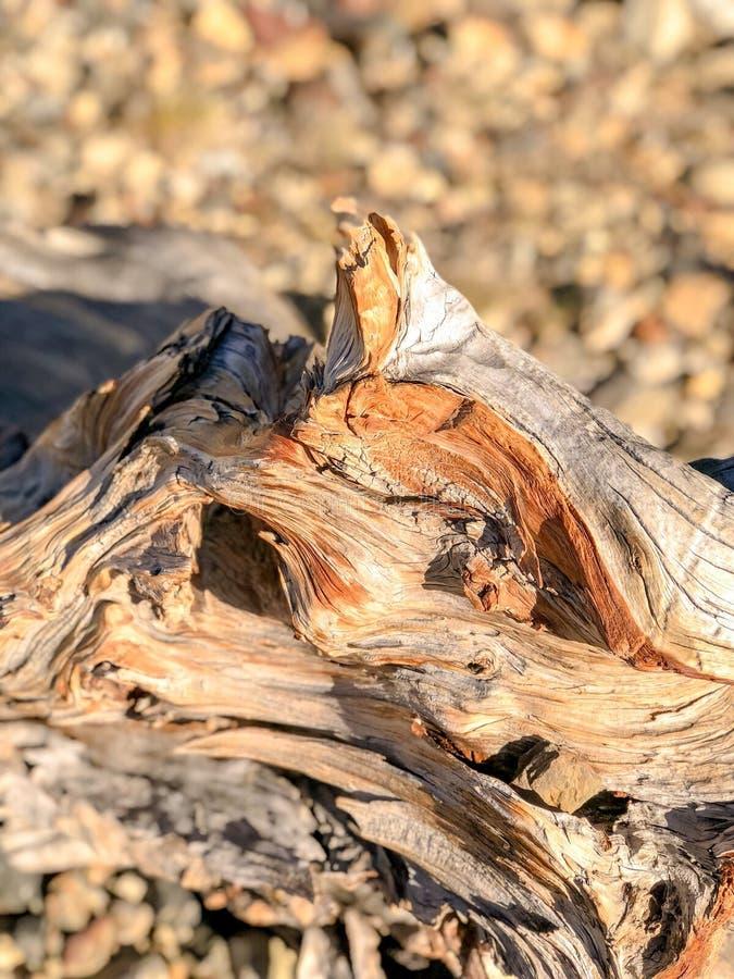Dried Tree Portrait at Yosemite Park royalty free stock photo