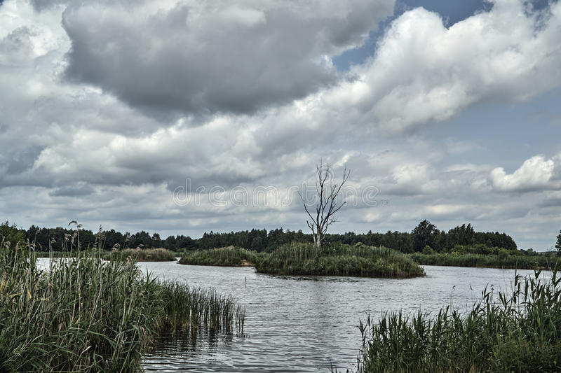 Dried tree among reeds on an islet on a lake. In Poland royalty free stock photo