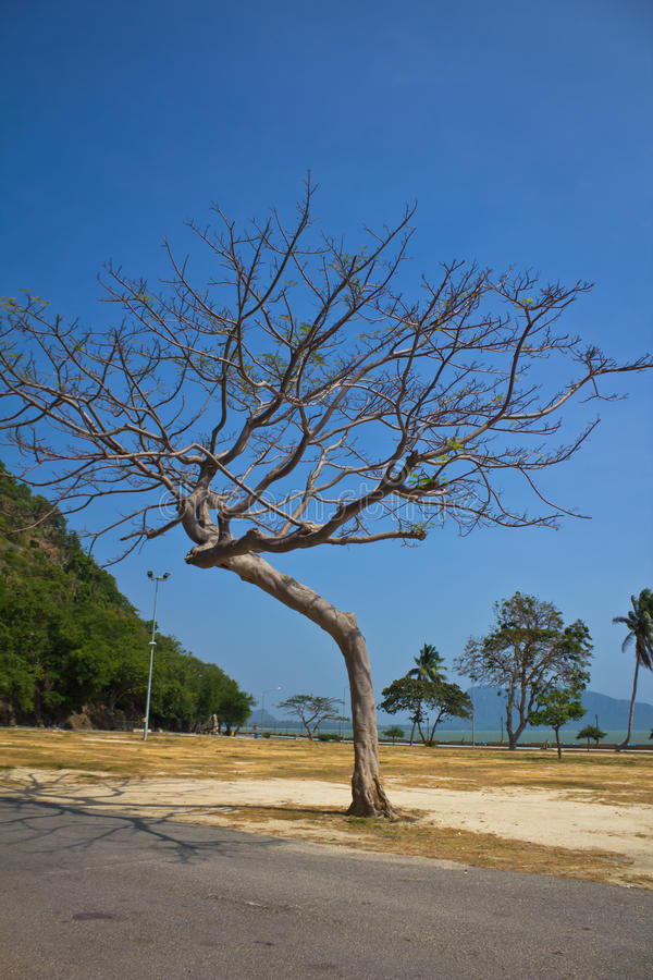 Download Dried tree stock image. Image of leaf, lonely, spring - 39507401