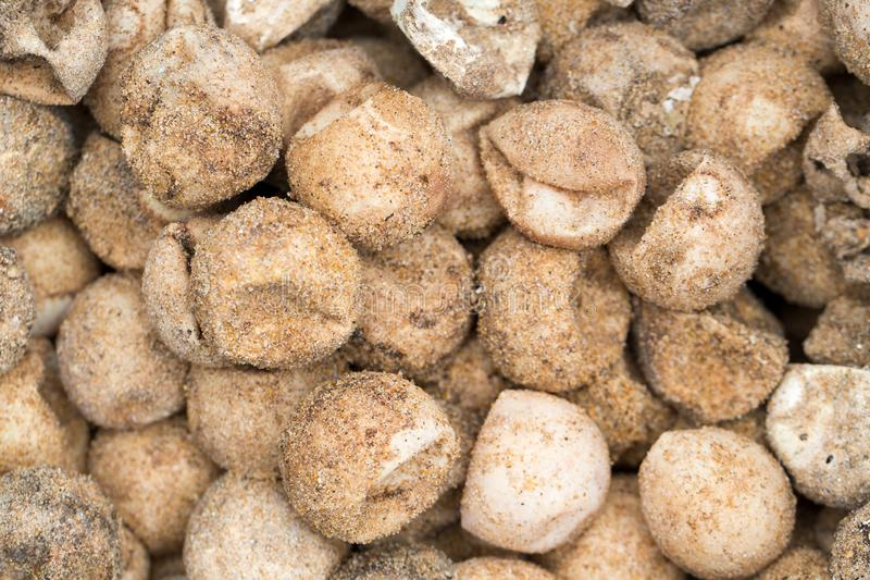 Dried turtle eggs with sand on the beach royalty free stock photography