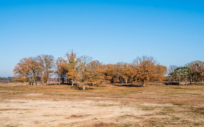 Dried up pond and colourful autumn trees in nature reserve Laarder Wasmeer, Laren, Netherlands. Dried up pool and row of trees in autumn in nature reserve royalty free stock photography