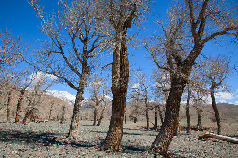 Download Dried-up river bed stock image. Image of tree, winter - 16222331