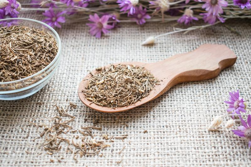 Dried Valerian roots in wooden spoon on sackcloth background. Va. Leriana officinalis, Caprifoliaceae in herbal medicine. Valerian Root for Anxiety and Sleep stock photo
