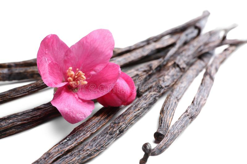 Dried vanilla sticks and flower on white background stock images