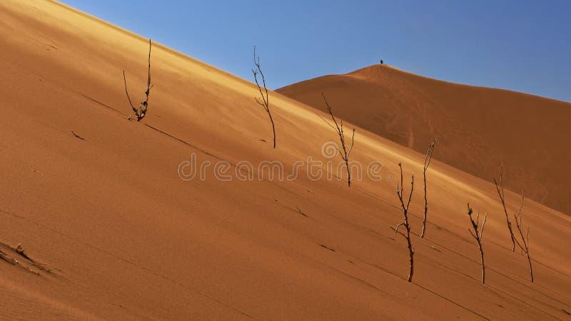 Dried vegetation on sand dunes royalty free stock image