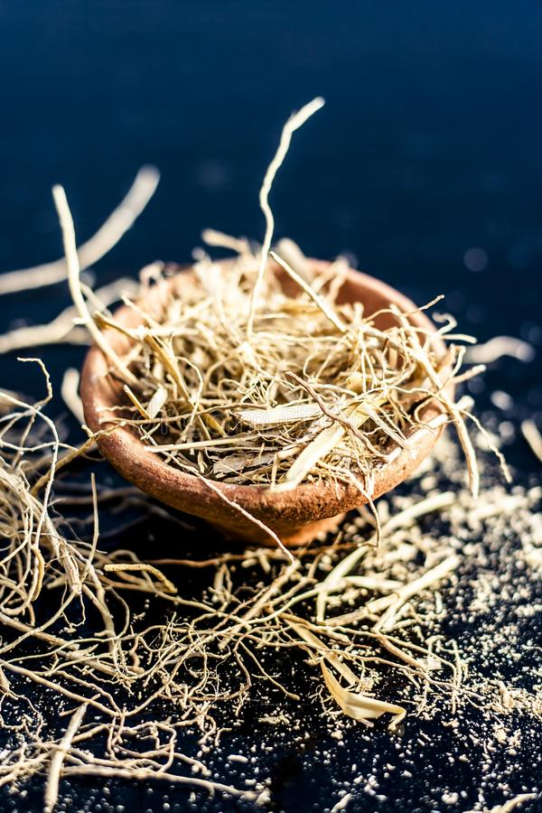 Close up of dried vetiver grass or khur or Chrysopogon zizanioides grass in a clay bowl o wooden surface. Dried vetiver grass or khus or Chrysopogon zizanioides royalty free stock photography