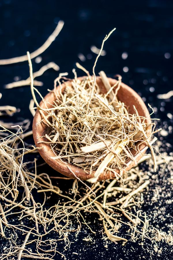 Close up of dried vetiver grass or khur or Chrysopogon zizanioides grass in a clay bowl o wooden surface. Dried vetiver grass or khus or Chrysopogon zizanioides stock photography