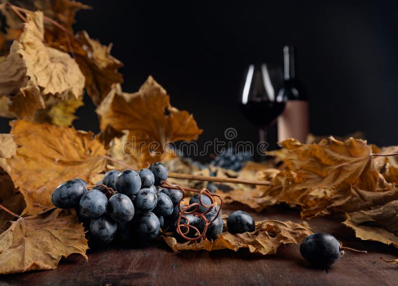 Dried vine leaves and blue grapes. Selective focus stock images