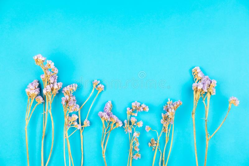 Dried violet statice flower on light blue background royalty free stock photos