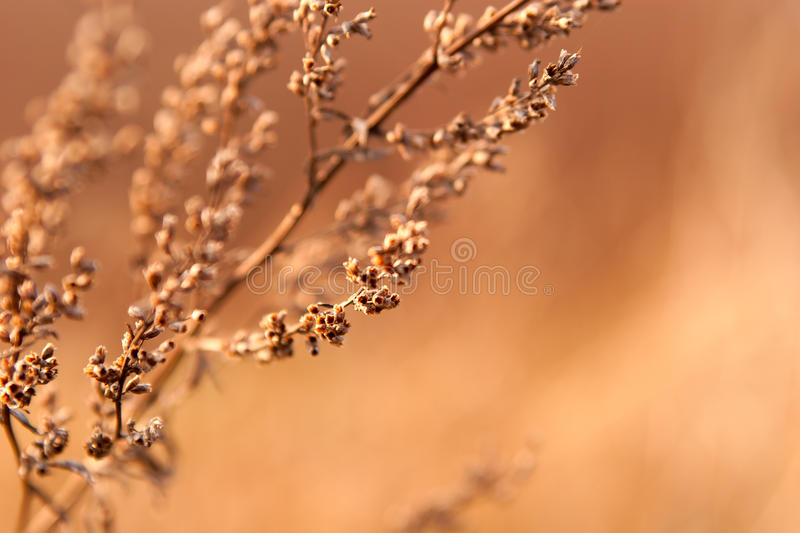 Download Dried weed in the sunlight stock image. Image of gray - 24834581