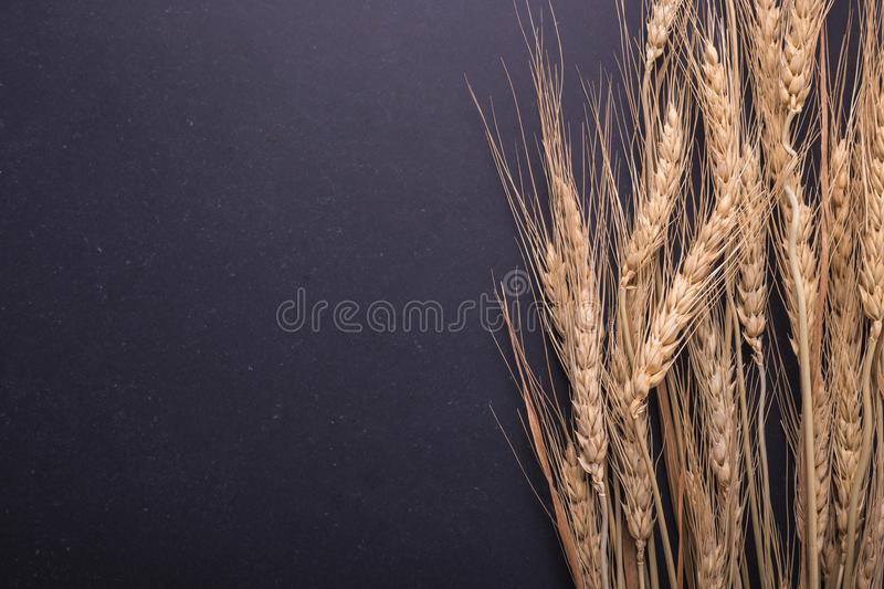 Dried wheat crop on black board. With free space for text or des stock photos