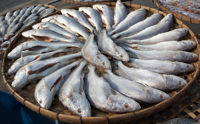 Dried Whisker Sheatfish the Food Preservation royalty free stock photos