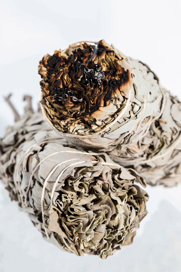 Ceremonial White Sage salvia apiana smoldering fumigation. Dried White Sage Smudge Stick burning dried leaves with smoke isolated on white background. White sage royalty free stock photo