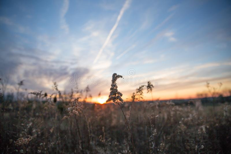 Dried Wild Grass and Country Fields In Pastel Winter Sunlight wi. Th Blue Sky royalty free stock photo