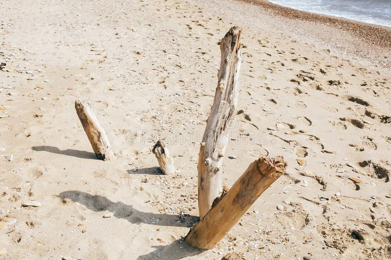 Dried wood branches on sandy beach at sea. Beautiful image of old dried wooden tree branches on background of sand and footprints stock photos
