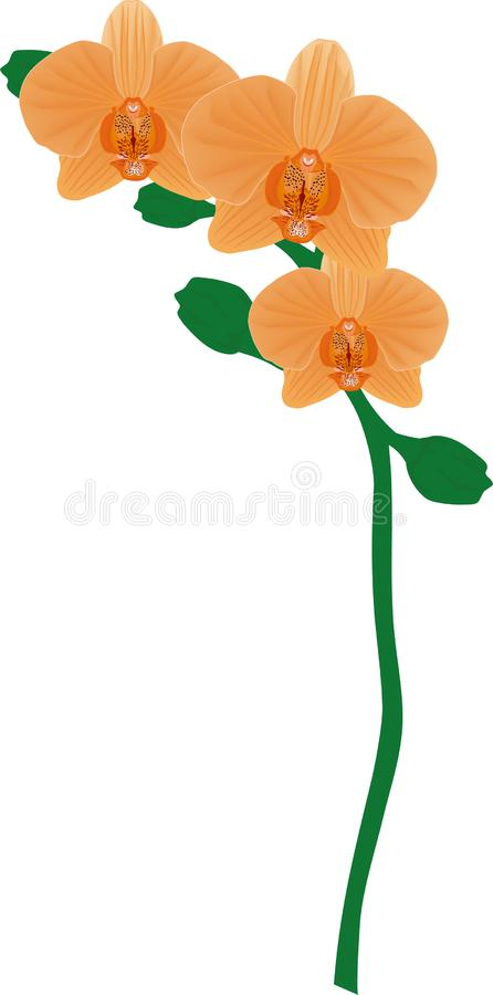 Drievoudige Abrikozenorchidee royalty-vrije stock afbeelding