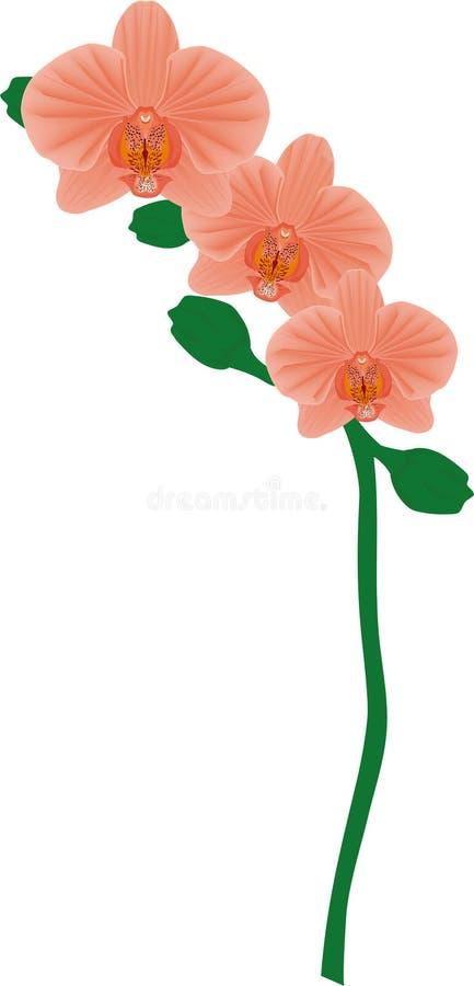 Drievoudige Coral Orchid stock afbeeldingen