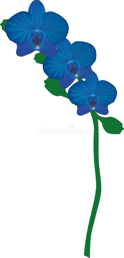 Drievoudige Lapis lazuliorchidee royalty-vrije stock foto's