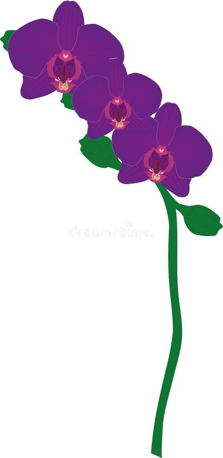 Drievoudige Violet Orchid royalty-vrije stock afbeeldingen