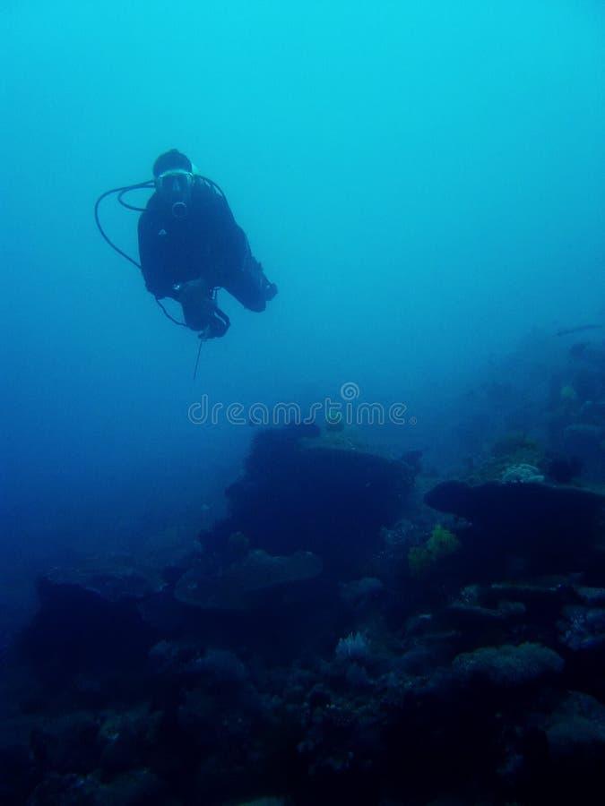 Drift dive scuba diver sabang philippines stock photo
