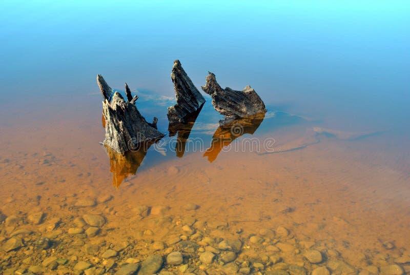 Download Drift wood stock photo. Image of tree, lake, stump, sollid - 13249234