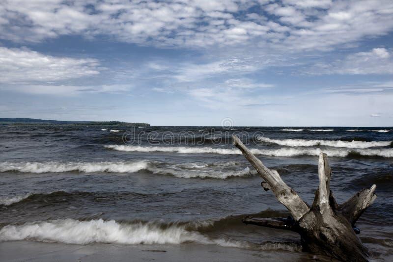 Download Drift wood stock photo. Image of water, ocean, wood, waves - 6992808