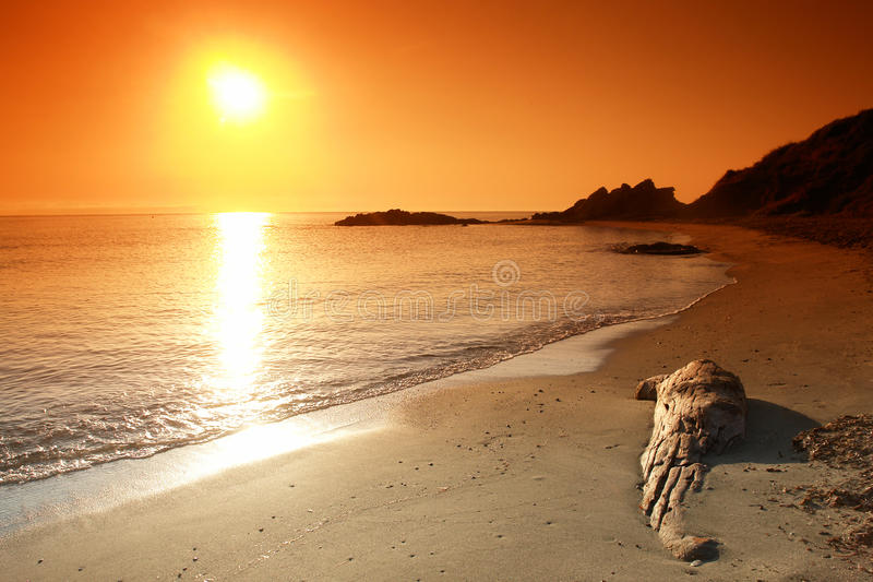 Drift wood on beach royalty free stock photo