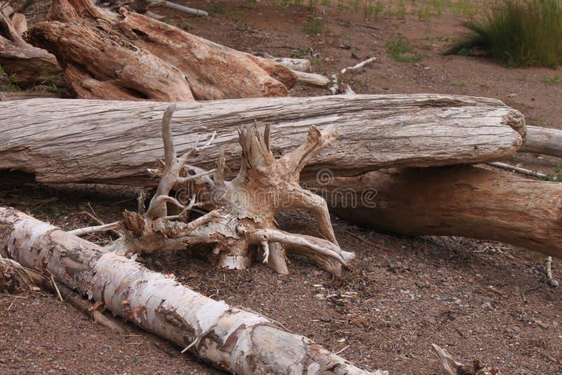 Drift wood on the beach stock photo