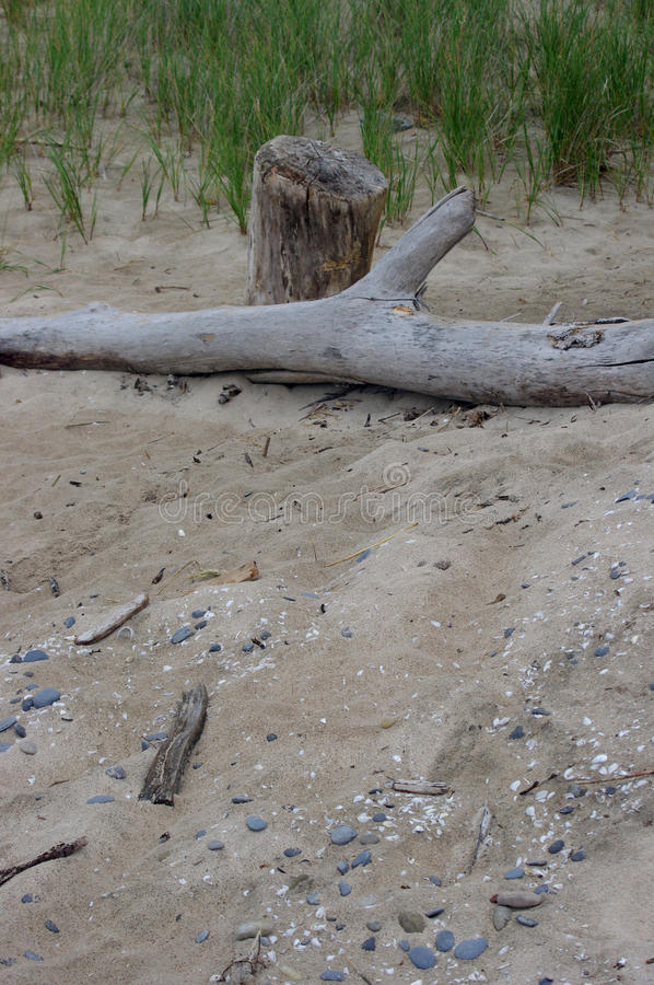 Drift wood at the beach stock image