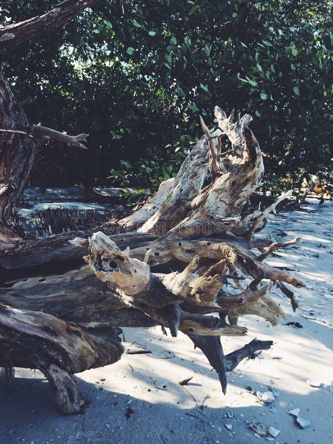 Drift wood stock photos