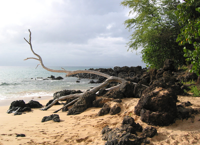Download Drift Wood On Lava Rocks And Sand Stock Image - Image of oceans, rainforest: 7331