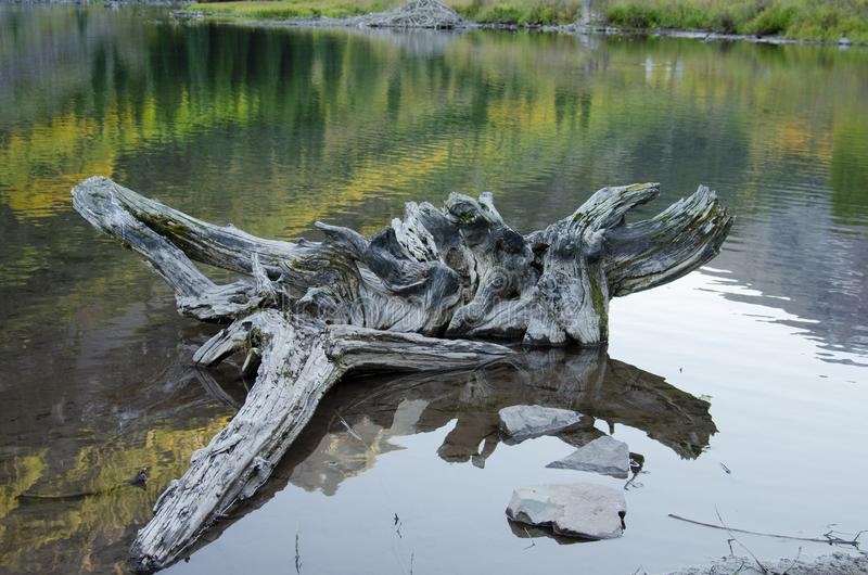 Drift wood in the mountains stock photography