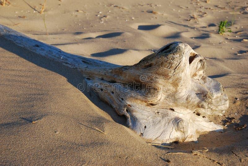 Drift wood on shore of Lake Michigan stock photos