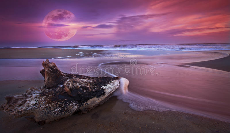 Drift wood at sunset on sandy beach and full moon royalty free stock images