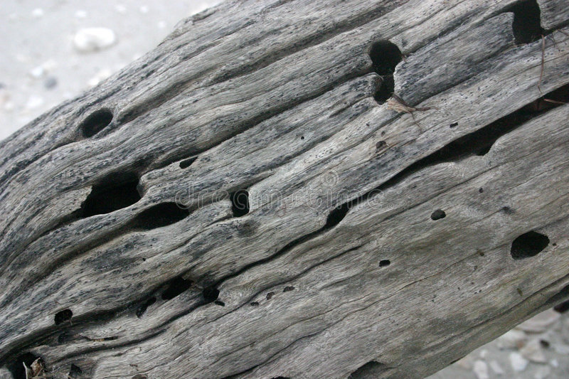Download Drift wood texture stock photo. Image of wood, erosion - 110752