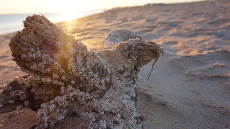 Driftwood από τη θάλασσα στοκ εικόνες με δικαίωμα ελεύθερης χρήσης