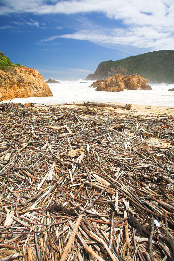 driftwood κεφάλια στοκ εικόνες με δικαίωμα ελεύθερης χρήσης