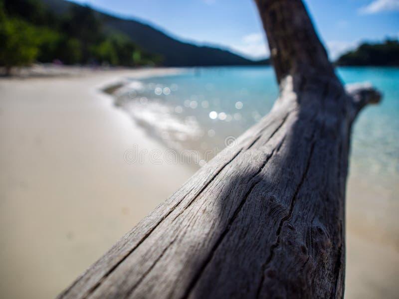 Driftwood πέρα από τον κόλπο κορμών, ST John, Παρθένοι Νήσοι στοκ εικόνες με δικαίωμα ελεύθερης χρήσης