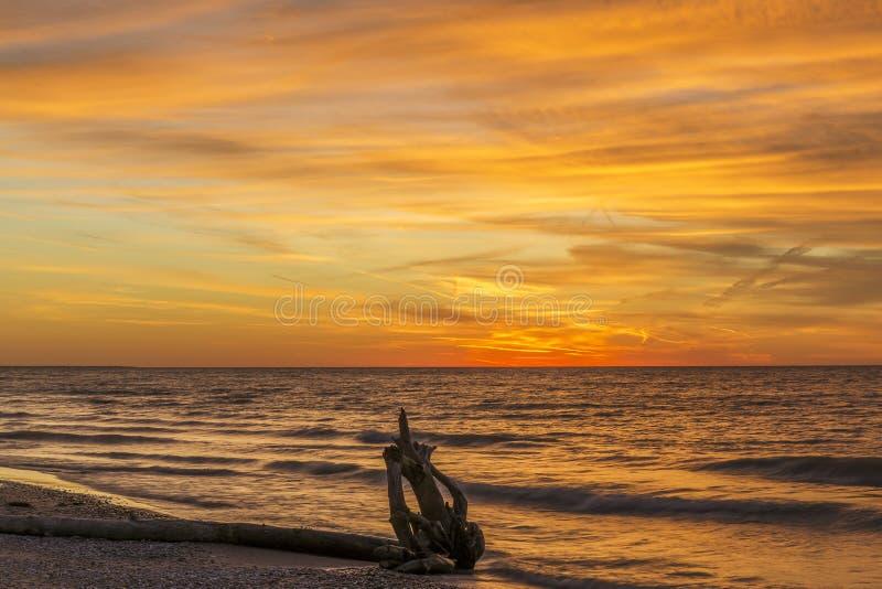 Driftwood σε μια Huron λιμνών παραλία στο ηλιοβασίλεμα στοκ εικόνες
