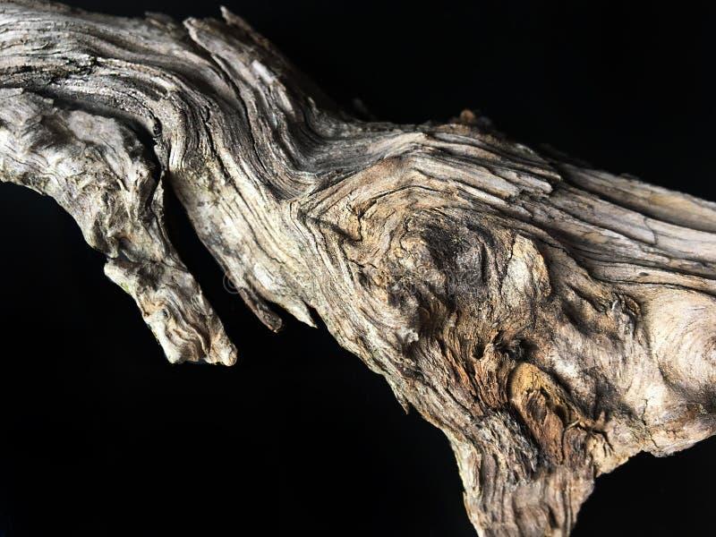 Driftwood φλοιών επάνω που απομονώνεται στενός στο Μαύρο στοκ φωτογραφία με δικαίωμα ελεύθερης χρήσης
