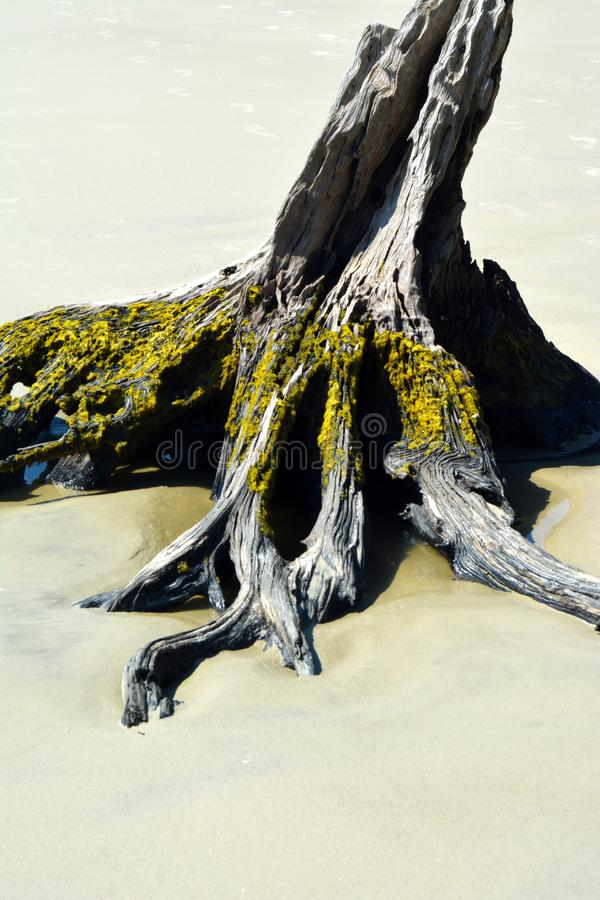 Driftwood на береге стоковые фото