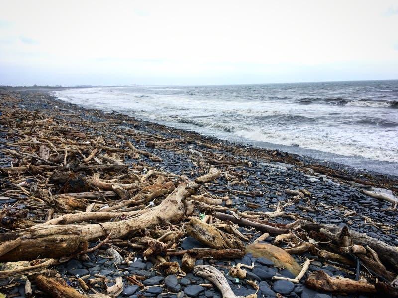 Driftwood на пляже после тайфуна стоковые фотографии rf
