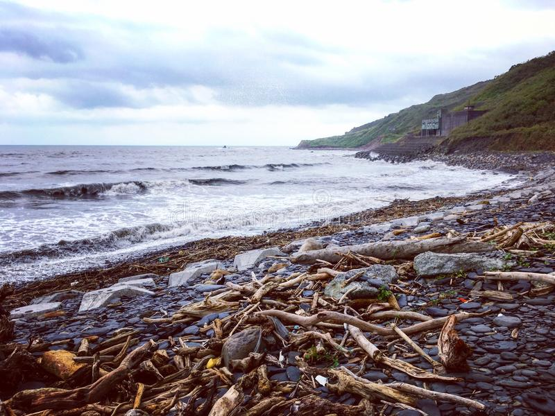 Driftwood на пляже после тайфуна стоковая фотография rf