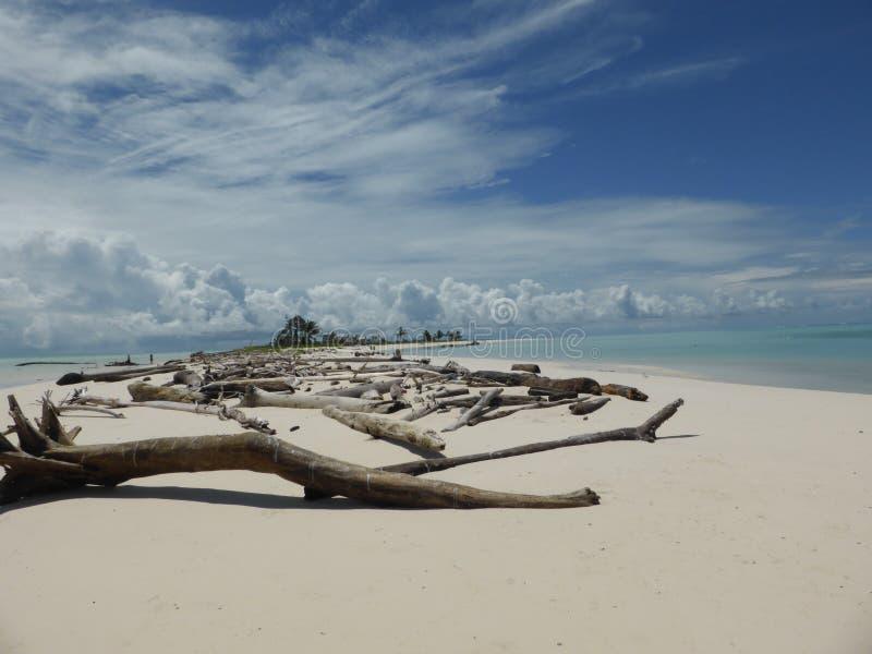 Driftwood на рифе Микронезии Helens стоковые фото