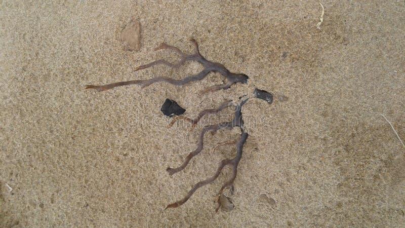 driftwood stock afbeeldingen