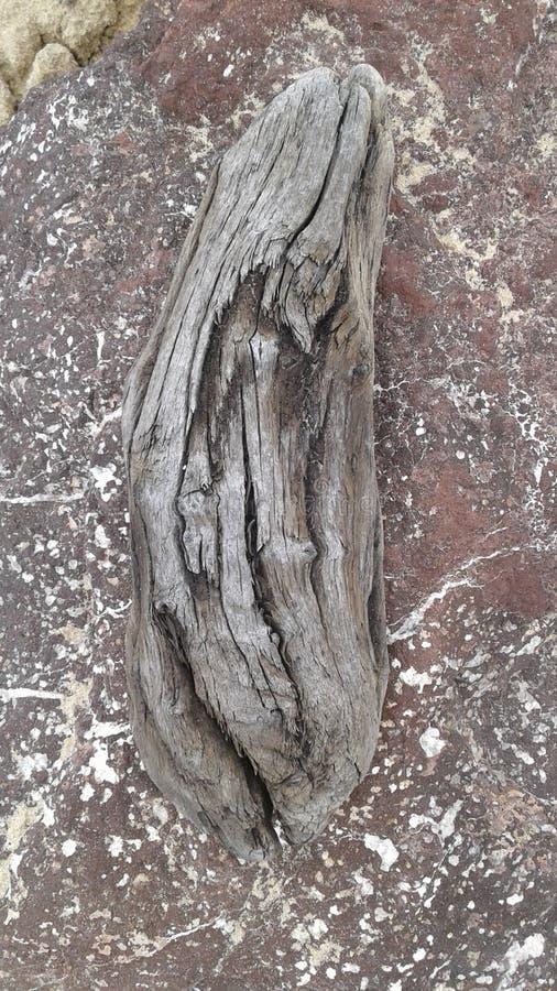 driftwood stock fotografie