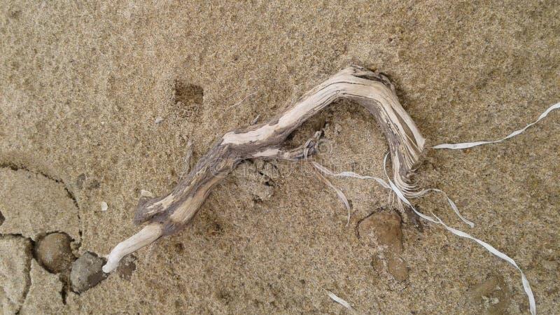 driftwood stock afbeelding