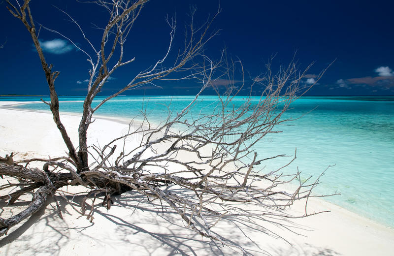 Driftwood. On a tropical beach royalty free stock images