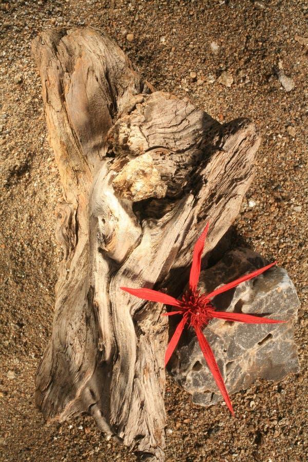 Driftwood fotografia de stock royalty free