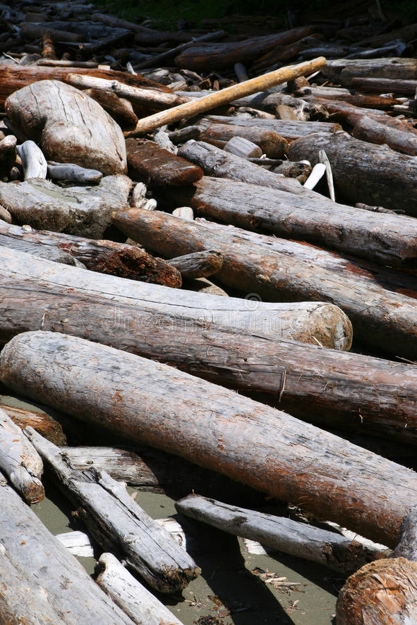 Download Driftwood stock photo. Image of sunlight, timber, outdoor - 27645866
